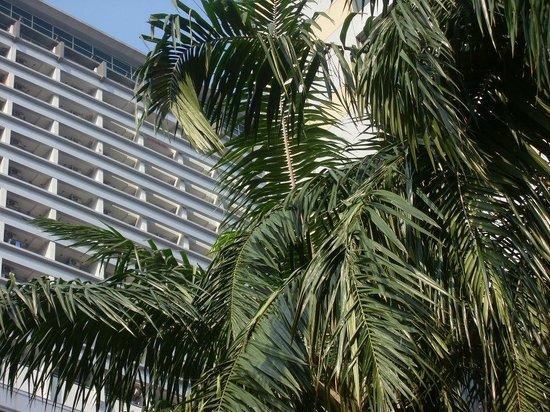 Amari Watergate Bangkok : вид с бассейна