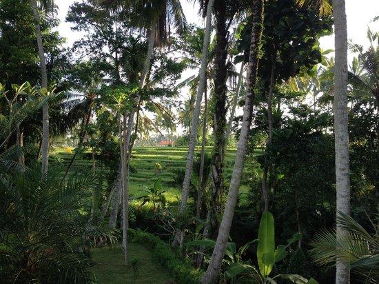 Junjungan Suite Villa : Vue de la chambre