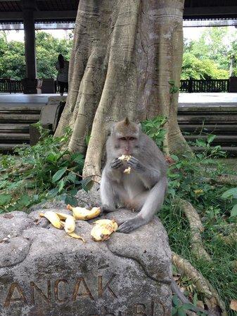 Junjungan Suite Villa : Monkey forest