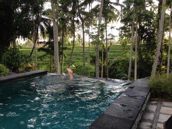 Junjungan Suite Villa : Piscine à débordement, vue sur les rizières