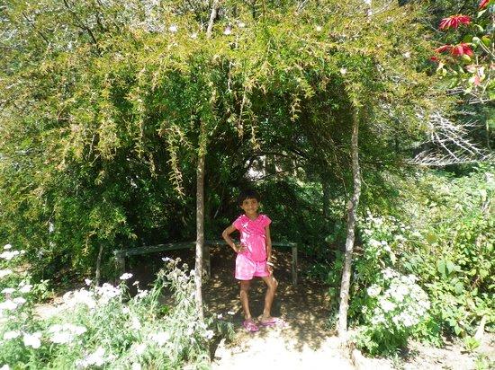 McLarens Lodge: garden