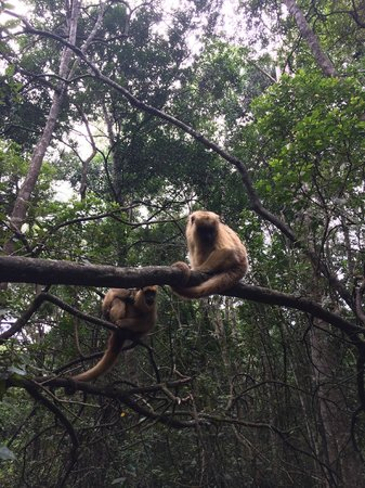 Monkeyland Primate Sanctuary: Walking through the Forrest