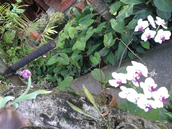 Puri Garden Hotel & Restaurant : ..fresh orchid flowers
