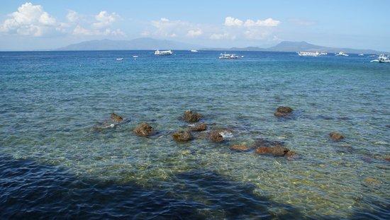 Blue Ribbon Dive Resort: Cristalline water