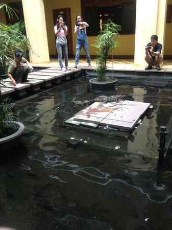 Victoria Angkor Resort & Spa: feeding time