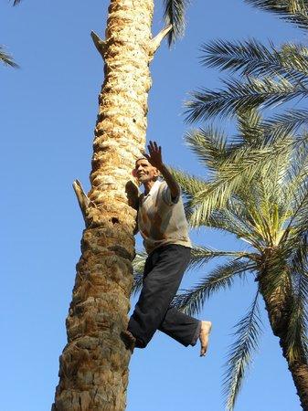 Le Vieux Quartier de Ouled el Hadef (Medina) : Impollinatore di palme
