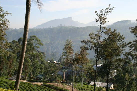 Ceylon Tea Trails : View from Norwood