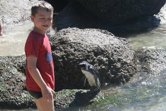 Boulders Beach : Boy and penguin , great day out