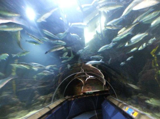 Deep Sea World: Fish.