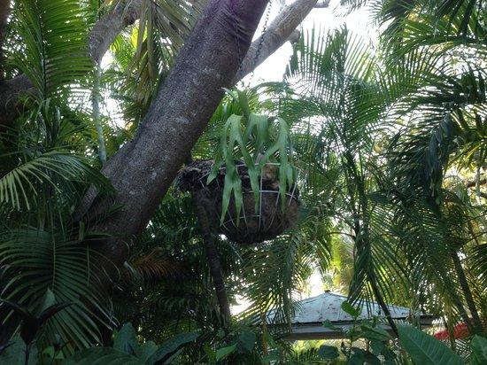 Key West Harbor Inn : Le jardin