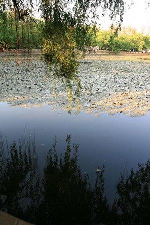 Green Lake (Cui Hu): green lake3