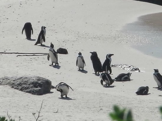 Discovery Tours - Day Tours: Boulders Beach