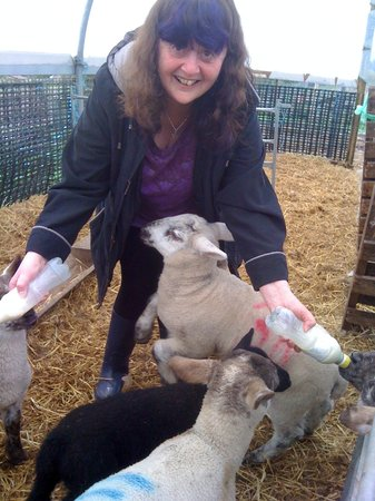 Falls of Holm: yours truly feeding the lambs