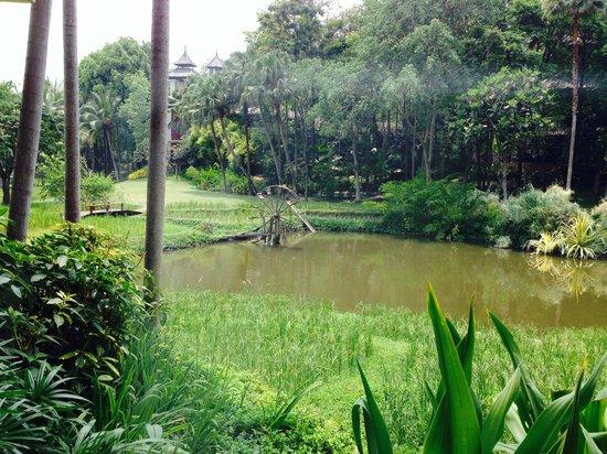 Four Seasons Resort Chiang Mai: View from my ground floor window