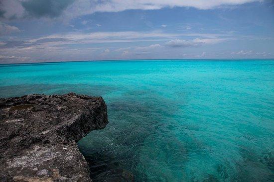 Coral Gardens: Exuma