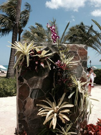 Courtyard by Marriott Isla Verde Beach Resort: Backside of  beach shower - orchids growing on wall