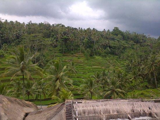 Park Regis Kuta Bali : Rice fields are amazing