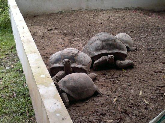 L'Oasi Guest House: tartarughe in giardino