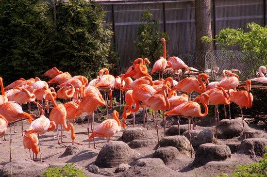 Weltvogelpark Walsrode: rosarote Gemeinschaft von Flamingos