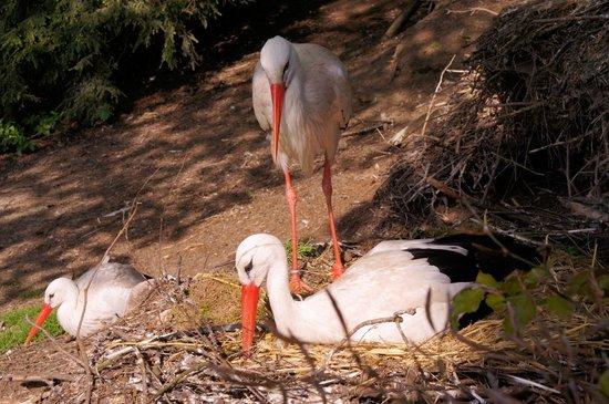 Weltvogelpark Walsrode: Störche