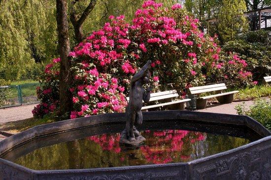Weltvogelpark Walsrode: Azaleen