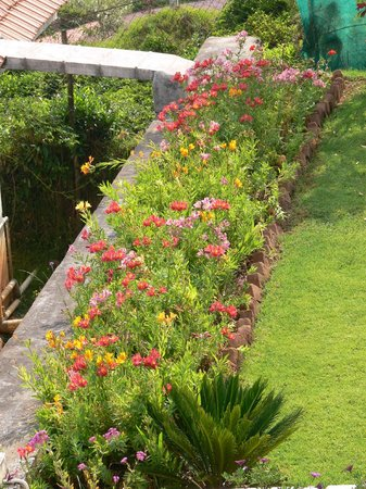 Bison Country - Home Stay: One of the flower borders
