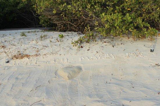 Boardwalk Hotel Aruba: Proposal