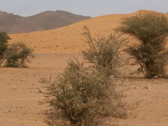 Moroccan Sahara : on the road