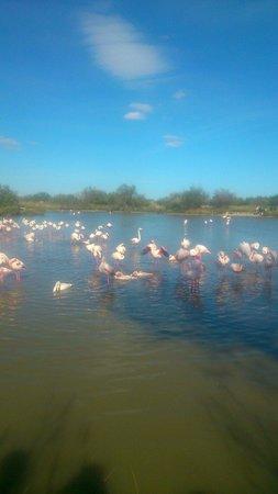 Le Parc Ornithologique de Pont de Gau : L'heure du bain!