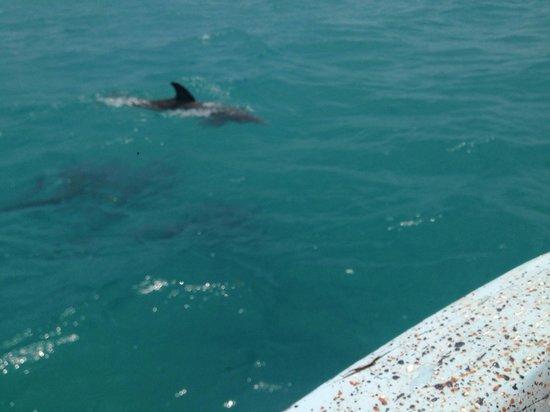 Sian Ka'an Biosphere Reserve : Delfini