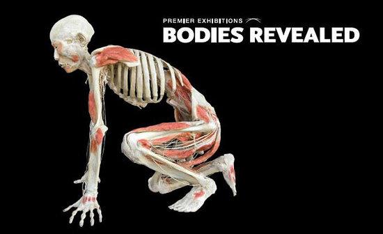Bodies Revealed Niagara