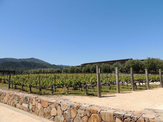 Robert Mondavi Winery: Vineyard