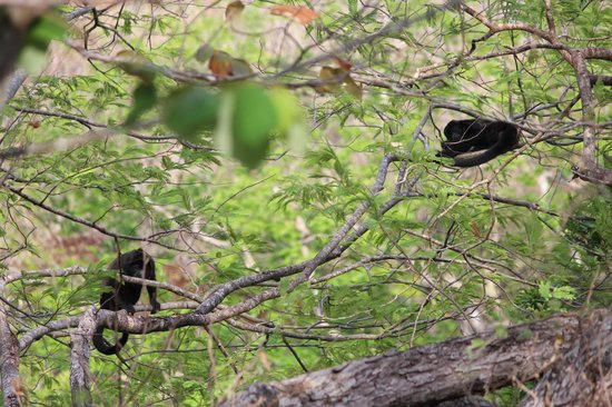 Rio Perdido: Monkeys visible from a cabin