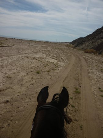 Mangroovy Horses and more... : Heading towards home