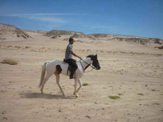 Mangroovy Horses and more... : Gamal and Dream