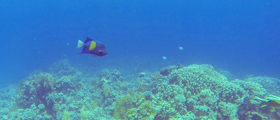 Sinai Dive Club: Plenty of fish to see