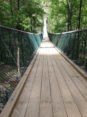 Foxfire Mountain Adventures : Swinging bridge