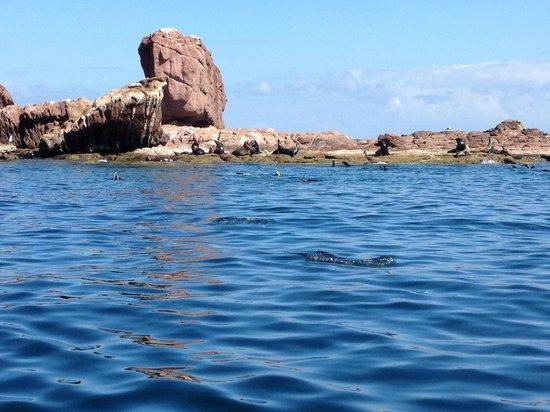 Sea & Adventures: Sea Lions galore