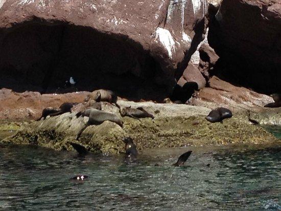 Sea & Adventures: Sea Lions basking on rocks