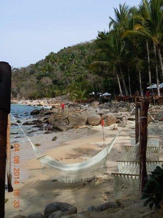 Vallarta Adventures - Las Caletas Beach Hideaway : View from the pier!