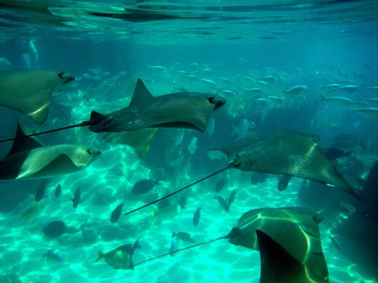 Discovery Cove: The Grand Reef
