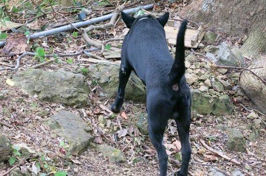 Maokong mountain: 道案内してくれた犬