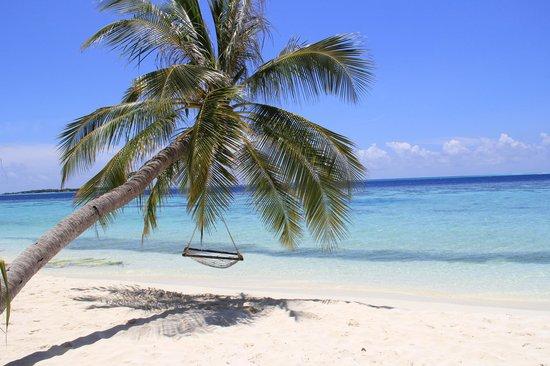 Vilamendhoo Island Resort & Spa : Plage!