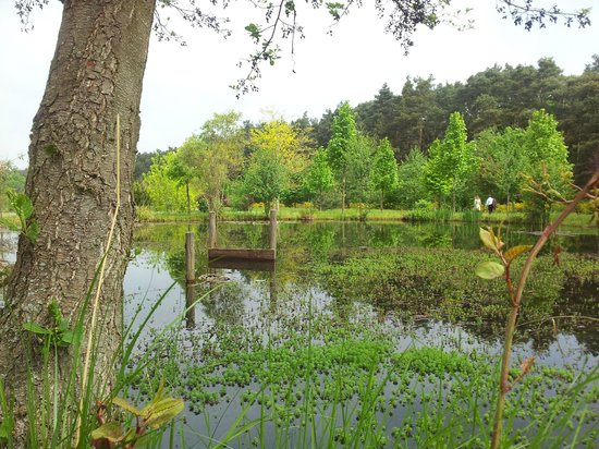 Artrium am Park: anliegender Park 5