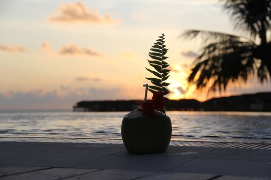 Vilamendhoo Island Resort & Spa : Coconuts