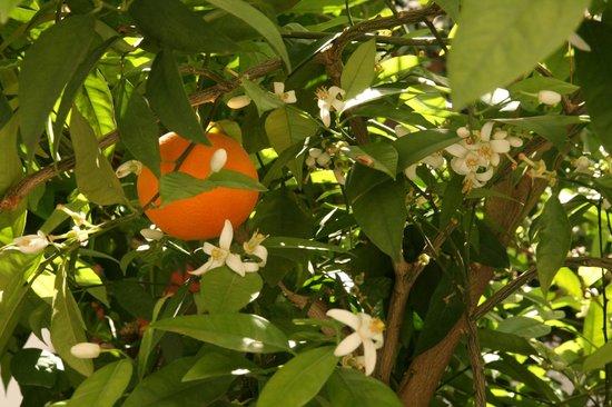 Riad Zineb: orangers dans la cour