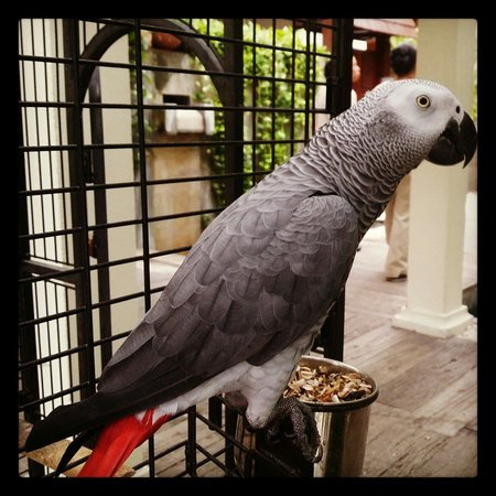 Burasari Resort: Playful parrot which will cheer your day :)