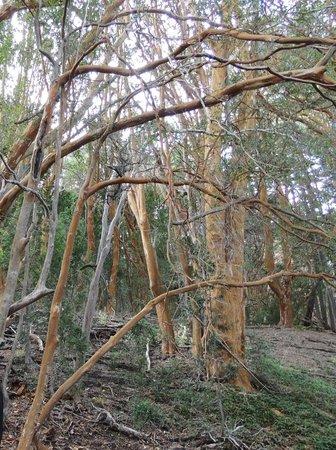 Bosque de Arrayanes: visão realista