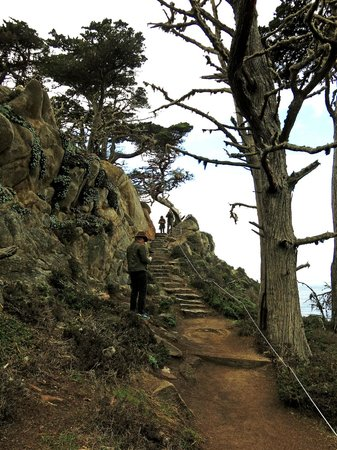 Point Lobos State Reserve: A steep trail along the cliffs - so dramatic