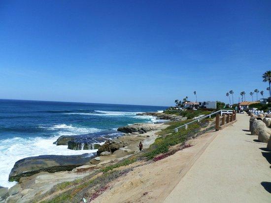 Windansea Beach : photo 4